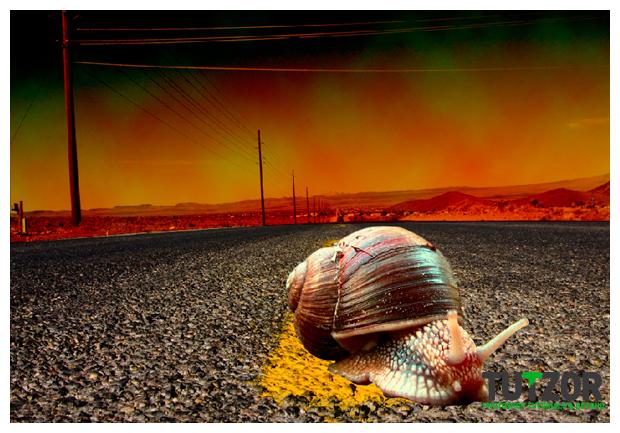 snail-race-11.jpg